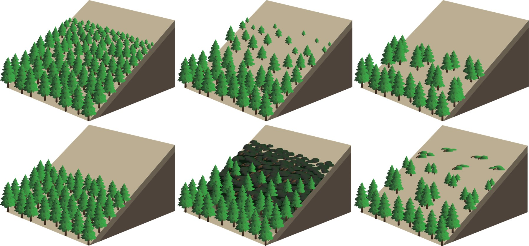 Six examples of distinct treeline forms