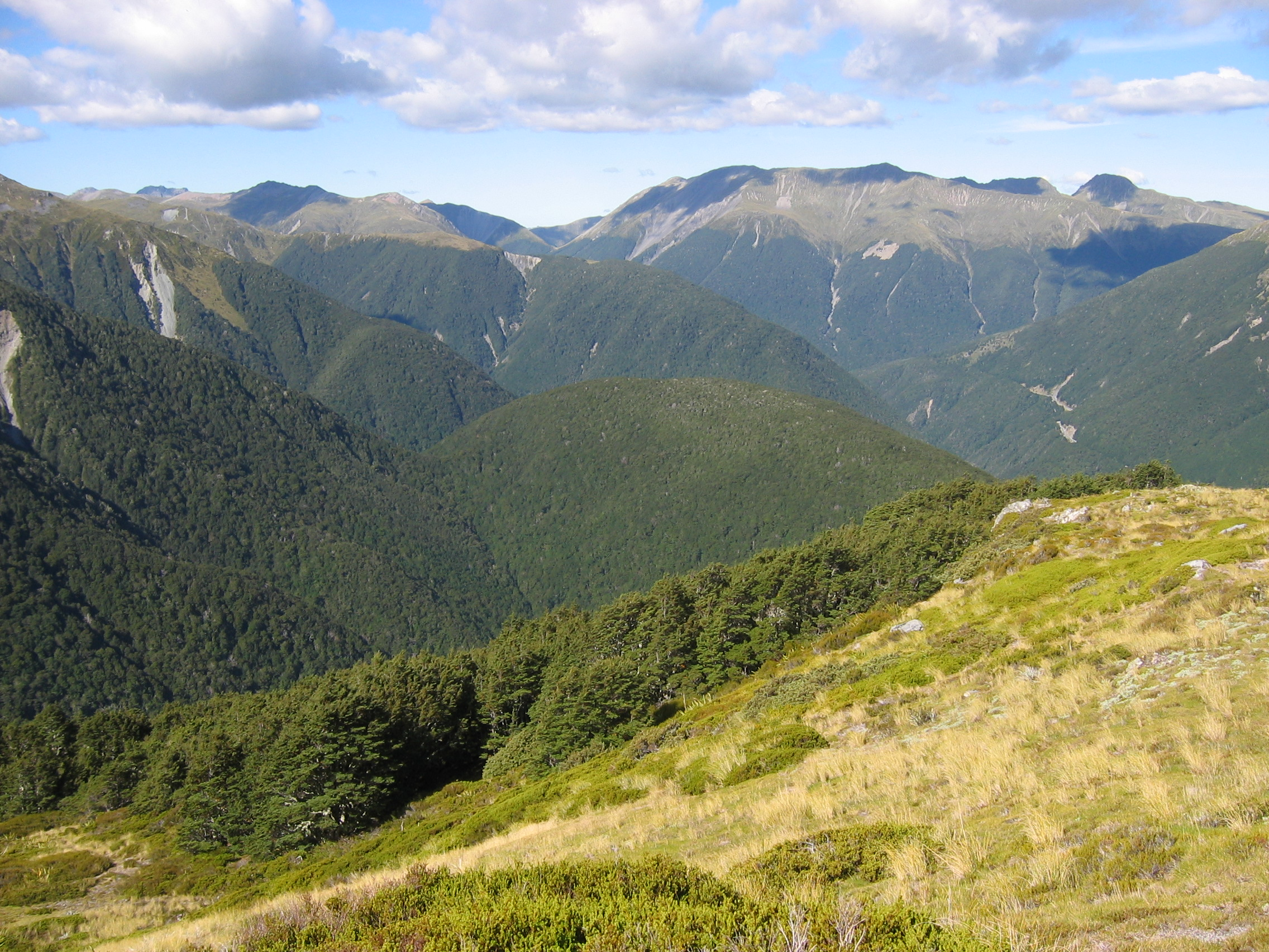 Abrupt discrete southern-beech treeline in New Zealand